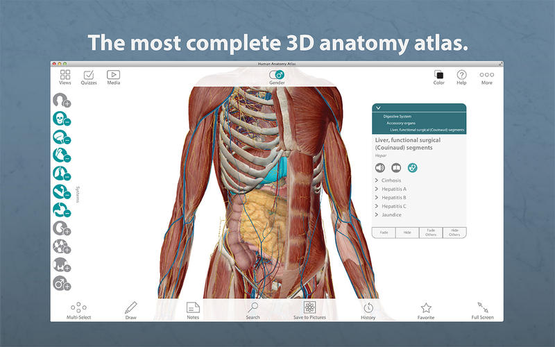 Human Anatomy Atlas 7.4.01 download | Mac OS