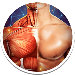 Human Anatomy 3D Pro - Bones And Muscles 4.0.0