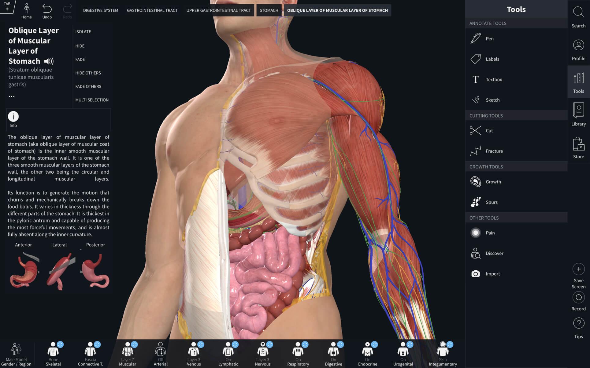 Complete Anatomy 2019 v4.0.1 download | macOS